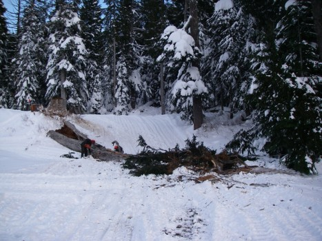 Cypress Mountain - Chop Down Tree in XC