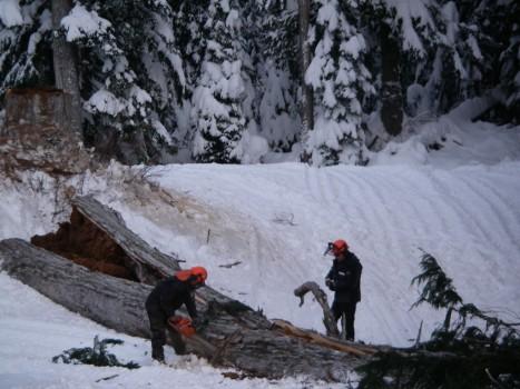 Cypress Mountain - Chop Down Tree in XC